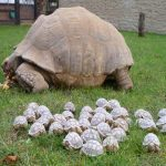 Tortoises Have Strong Shells