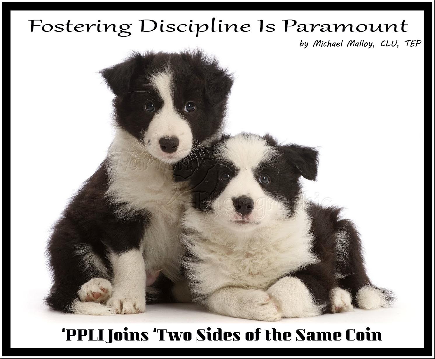 Fostering Discipline Is Paramount