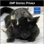 EWP Stories-1