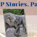 EWP Stories-4